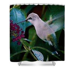 Flower And Hummingbird Shower Curtain