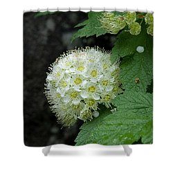 Shower Curtain featuring the photograph Flower Ball by Rod Wiens