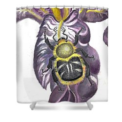 Shower Curtain featuring the painting Flower Beetle by Dawn Senior-Trask