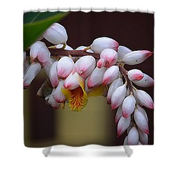 Flower Buds Shower Curtain