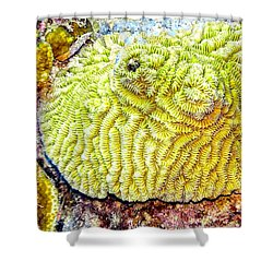 Flower Coral Shower Curtain
