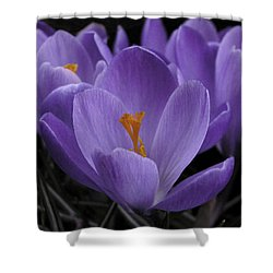 Shower Curtain featuring the photograph Flower Crocus by Nancy Griswold