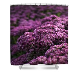Shower Curtain featuring the photograph Sedum Flower Detail by Inge Riis McDonald