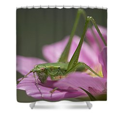 Flower Hopper Shower Curtain by Michael Eingle