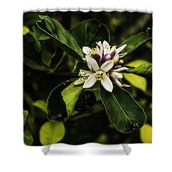 Flower Of The Lemon Tree Shower Curtain