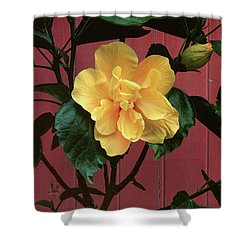 flower photographs - Yellow Rose Shower Curtain