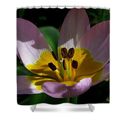Flower Shadows Shower Curtain