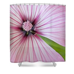 Flower Star Shower Curtain by Elvira Butler