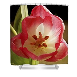 Shower Curtain featuring the photograph Flower Tulip by Nancy Griswold