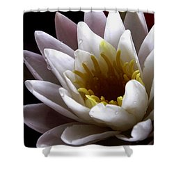 Shower Curtain featuring the photograph Flower Waterlily by Nancy Griswold