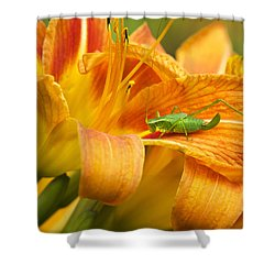 Flower With Company Shower Curtain by Christina Rollo