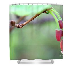 Flowering Bud Shower Curtain
