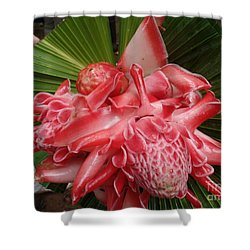 Flowering Coconiut Sao Tome Shower Curtain