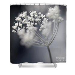 Shower Curtain featuring the photograph Flowering Dill Cluster by Elena Elisseeva