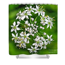 Flowering Garlic Chives Shower Curtain by Kaye Menner
