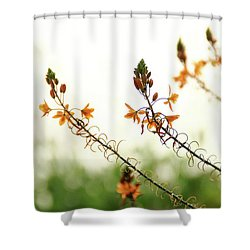 Flowering In Israel At The Sunset Shower Curtain by Yoel Koskas
