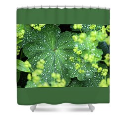 Flowering Lady's Mantle - Shower Curtain