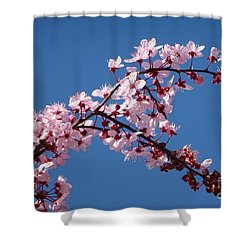 Flowering Of The Plum Tree 4 Shower Curtain by Jean Bernard Roussilhe