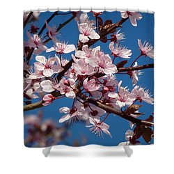 Flowering Of The Plum Tree 5 Shower Curtain by Jean Bernard Roussilhe