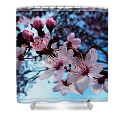 Flowering Of The Plum Tree 6 Shower Curtain by Jean Bernard Roussilhe