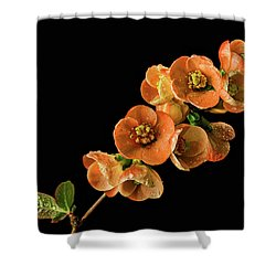 Shower Curtain featuring the photograph Flowering Quince Orange by Mary Jo Allen
