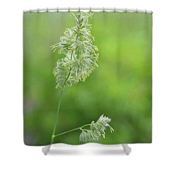 Flowering Tall Grass Shower Curtain