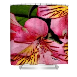 Flowers # 8728_1 Shower Curtain by Barbara Tristan