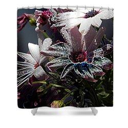 Flowers Shower Curtain by Stuart Turnbull