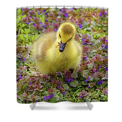 Flowers For Lunch Shower Curtain