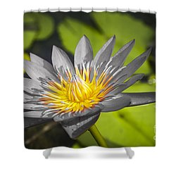 Flowers Of Grey Shower Curtain
