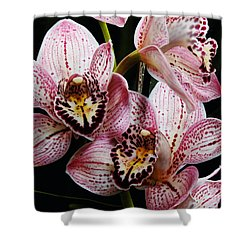 Flowers Of Love Shower Curtain by Scott Cameron