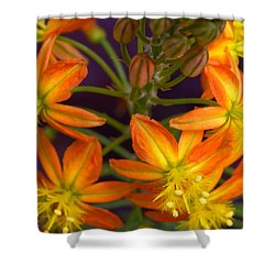 Flowers Of Spring Shower Curtain by Stephen Anderson