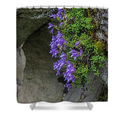 Flowers Shower Curtain by Rod Wiens