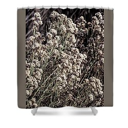 Fluff And Seeds Shower Curtain by John Brink