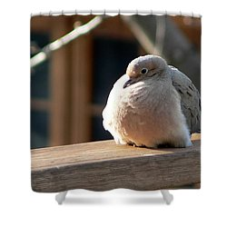 Shower Curtain featuring the photograph Fluffy by Laurel Best