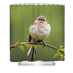Fluffy Mockingbird Shower Curtain by Terry DeLuco
