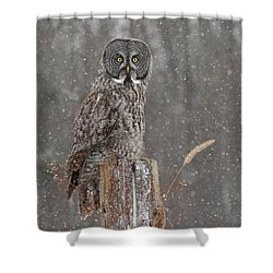 Flurries In The Forecast Shower Curtain by Heather King