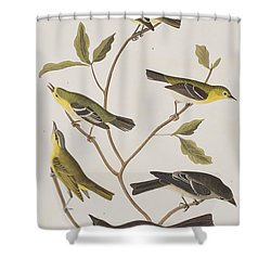 Fly Catchers Shower Curtain