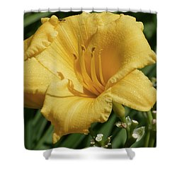 Shower Curtain featuring the photograph Fly On A Lilly  by Lyle Crump