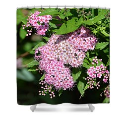 Shower Curtain featuring the photograph Fly On The Flowers  by Lyle Crump