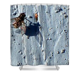 Shower Curtain featuring the photograph Fly On The Wall by Betty Northcutt