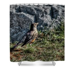 Shower Curtain featuring the photograph Fly Robin Fly by Pennie  McCracken