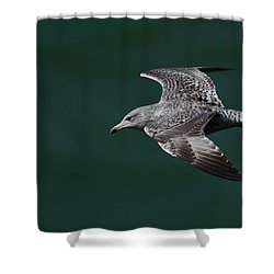 Flyby Shower Curtain