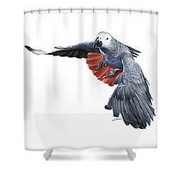 Flying African Grey Parrot Shower Curtain by Owen Bell