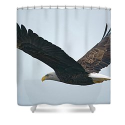 Flying Bald Eagle Shower Curtain