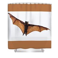 Flying Bat Shower Curtain by Craig Dingle