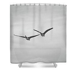 Flying Companions Shower Curtain by Jason Coward