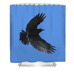 Shower Curtain featuring the photograph Flying Crow by Bradford Martin