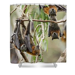 Flying Fox Colony Shower Curtain by Craig Dingle