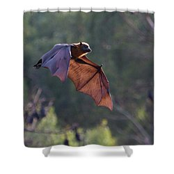 Flying Fox In Mid Air Shower Curtain by Craig Dingle